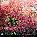2011_台北奧萬大春