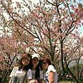 我在台北的日子