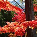 2009秋天.京都