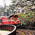 2016阿里山-櫻花與火車