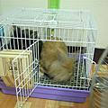 2007。4月 三隻兔仔~三隻兔崽子