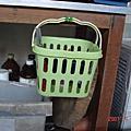 兔子們在馬來西亞的生活2007.9月