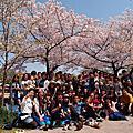 JH Day 365 大阪桜ノ宮公園、大阪城花見