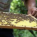 蜜蜂記錄-1