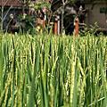 2008_09_Bali