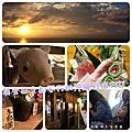 英文日文都不行的沖繩自由行Ⅱ-day1