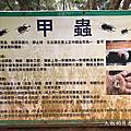 羊稠步道2020/06/21獨甲仙