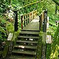 嘉義竹坑溪步道
