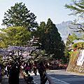 1030322 小笠原山、水山巨木、櫻之道