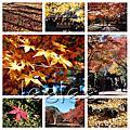 2012 京都&四國,還有紅葉