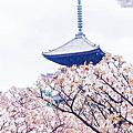 KYOTO .APR.2015