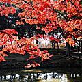 20141122日本關西紅葉狩Day3奈良半日遊