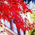 20141123日本關西紅葉狩Day4神戶