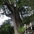 馬告生態公園:棲蘭神木群