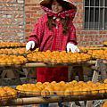 柿餅製作、南庄采風