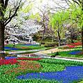 鬱金香公園