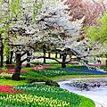 國營昭和公園櫻花