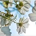 |高雄‧美濃|春暖花開,賞花趣