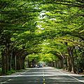 |台南‧學甲|174縣道綠色隧道