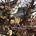 冬の寂靜京都