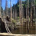 忘憂森林+金柑樹山+杉林溪公園
