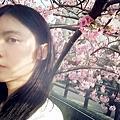 春之櫻。躲貓貓∮2021.02.16