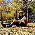 2016 武陵秋天。金黃色的銀杏森林