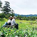 2017 台中NO.07福壽山農場(貓耳菊)