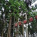 2018 新竹。五峰_戈巴侖露營區[24露]