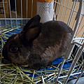 兔寶貝-king