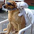 靈犬lucky show