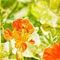 大屯花卉農場