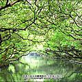安南區-四草紅樹林綠色隧道 2012-1209