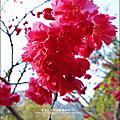 谷關-谷關溫泉公園 2014-0131