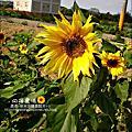 觀音-向陽農場 2010-0328