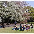 2015新宿御苑~1