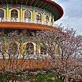 天元宮的櫻花開了