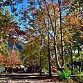 五彩繽紛的美樹營地