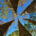 秀巒的楓樹林