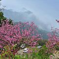 粉紅世界的蓮臺山
