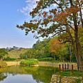 寶山大埤塘楓葉