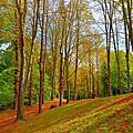 塞夫爾的森林公園
