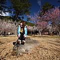2009-02-05~07 武陵花見