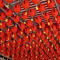 2009-05-02 三義南庄行