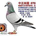 2013冬季中正林園入賞鴿