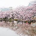 [遊]2016.東京追櫻趣