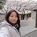 2011京阪賞櫻-櫻花篇