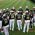 2008.5.11新莊棒球場-獅熊戰