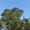 20150418  中興林場
