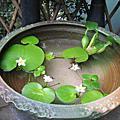2009家居與庭園秋色
